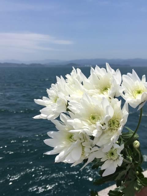 海洋散骨の花の写真