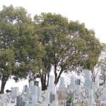 木と曇り空を背景にした墓地の写真