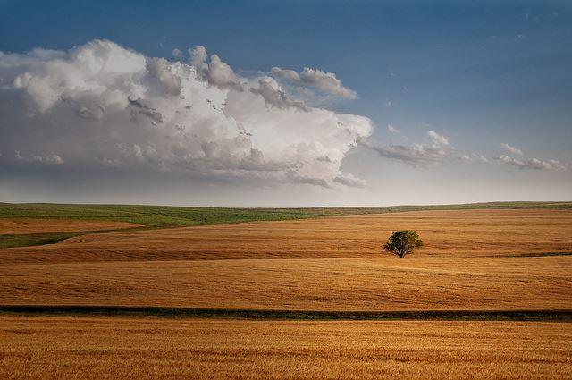 草原に1本だけ立ってる木の画像