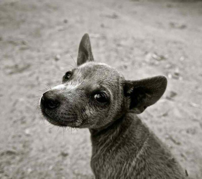 振り返る子犬の写真